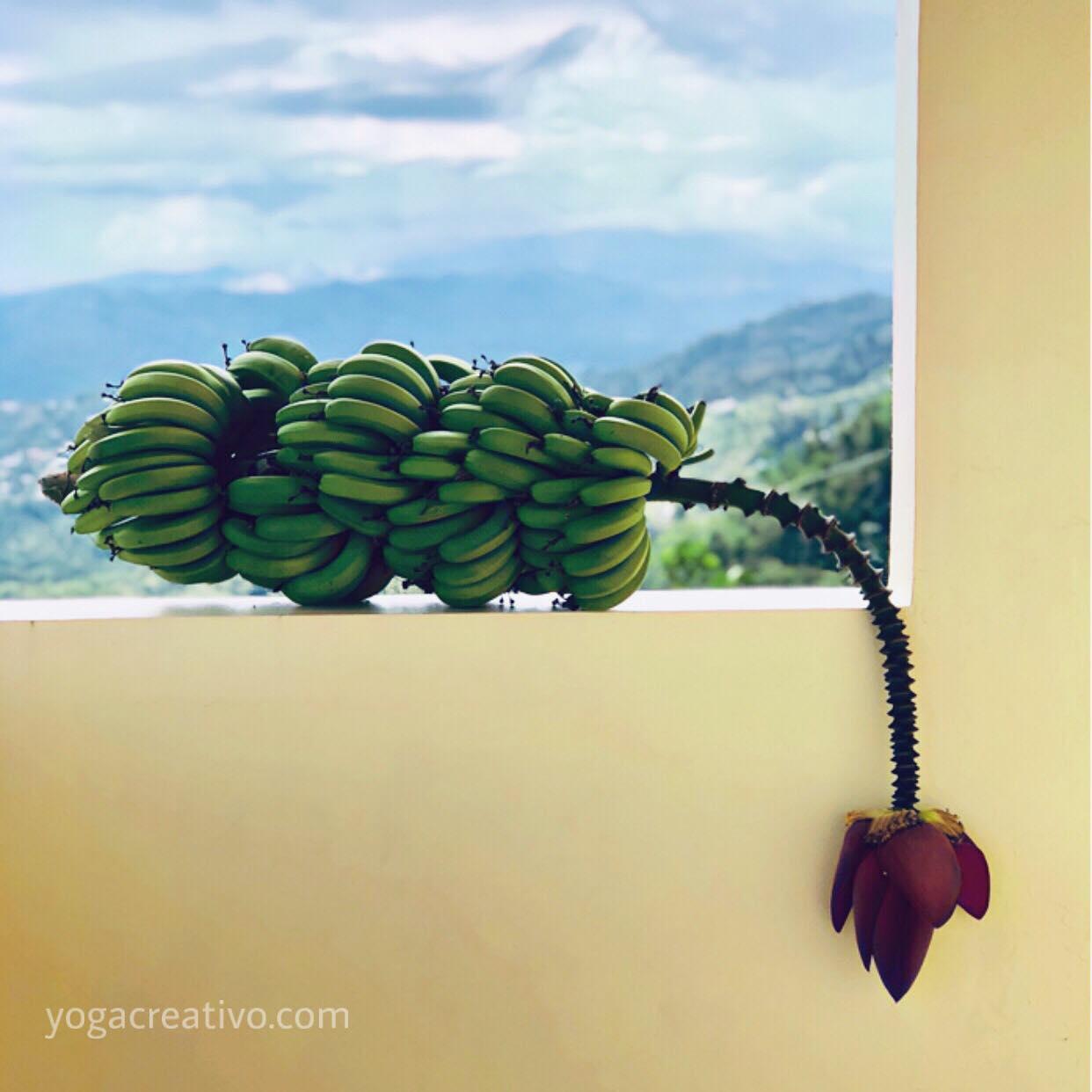 Yoga Aéreo: Descubre una Nueva Experiencia Aérea con AeroYoga® en la Casa de la Ceiba, Puerto Rico