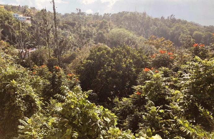 AeroYoga® Institute Puerto Rico, Visita la Casa de la Ceiba, Abrimos Pronto de Nuevo!