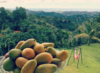 Disfruta de los Mangos y del Columpio de AeroYoga ® en la Casa de la Ceiba Puerto Rico, Yoga Aéreo